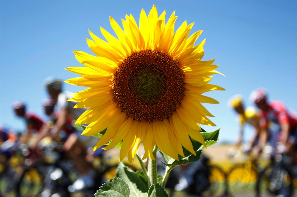 写真で振り返る ツール・ド・フランス2010