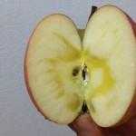 蜜入りりんごの見分け方